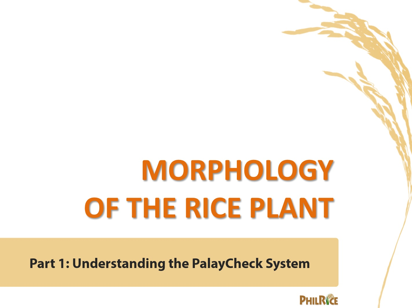 Morphology of the rice plant