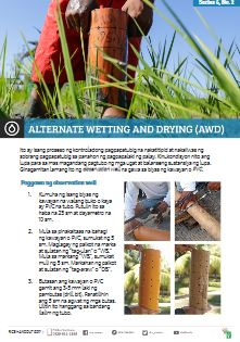 alternate-wetting-and-drying