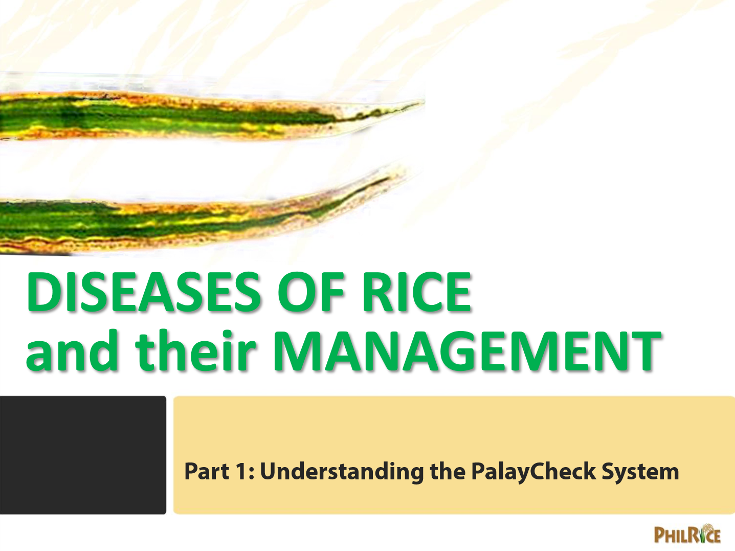 Diseases of rice and their management