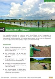 How to prepare the rice field