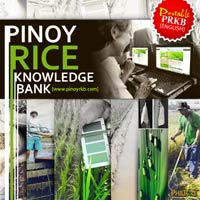 pinoyrice-cd-english