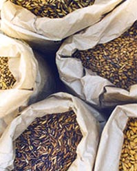 variety-and-seed-selection-img
